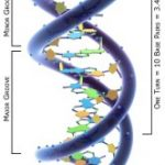 DNA... The Thousand Years of Peace, the Bible, and more