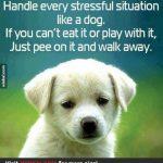 Lighten up... Do what dogs do...