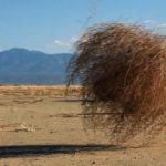 The tumbleweed or the invisible dynamic of a life worth living