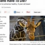 Your vibration and Copenhagen zoo kills 18 month old giraffe and feeds it to other animals of the zoo